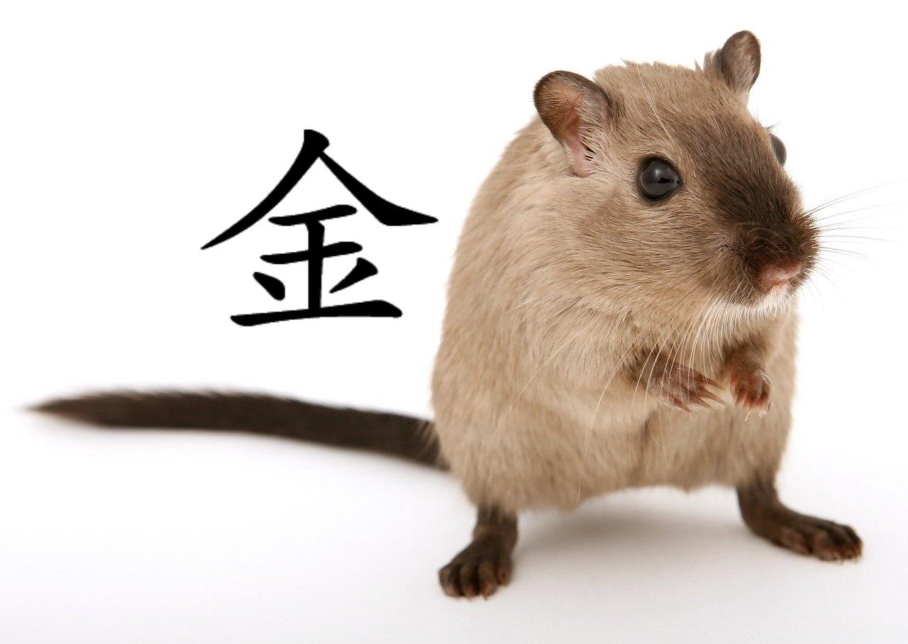 Gōngxǐ fācái  (恭喜发财)